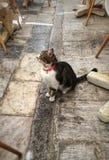 De kat zittend ontspant Royalty-vrije Stock Foto