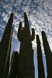 De kathedraal van de cactus stock afbeeldingen