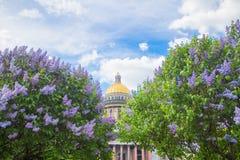 De Kathedraal van heilige Isaac ` s in de bloemen van sering en Apple-bomen royalty-vrije stock foto's