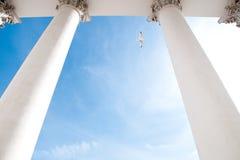 De kathedraalkolommen van Helsinki Stock Afbeeldingen
