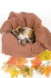 De katjes in een mand met daling gaat weg stock afbeeldingen