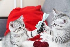 De katjes zijn het leuke spelen met een boog Gestreepte katjes Stock Foto