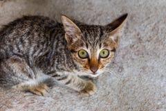 De katjes zijn nieuwsgierig, geboekt met wijd open ogen stock afbeeldingen