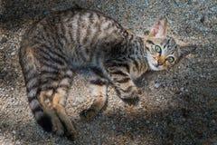 De katjes zijn nieuwsgierig, geboekt met wijd open ogen stock foto