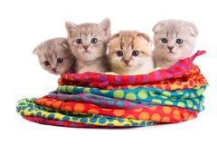 De katjes zitten in een zak Stock Fotografie