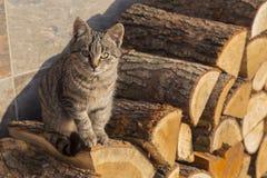 De katjeszitting op firewoods Stock Afbeeldingen