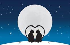 De katten gaan zitten maanlicht Stock Foto's