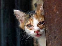 De katten kijken schreeuwend Royalty-vrije Stock Foto's