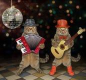 De katten presteren in een nachtclub stock afbeelding