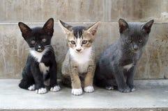 De katten van de pot Royalty-vrije Stock Afbeelding