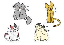 De katten van het wasgezicht Stock Afbeeldingen