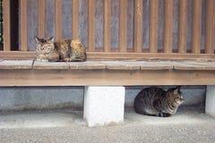 De katten van Japan Stock Fotografie