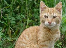 De katten van Wonderfull Stock Foto's