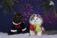 De katten vieren het nieuwe jaar Stock Foto