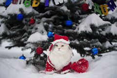 De katten vieren het nieuwe jaar Stock Afbeelding