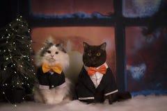 De katten worden klaar voor het nieuwe jaar Royalty-vrije Stock Foto
