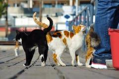 De katten wrijven hun staarten stock foto's