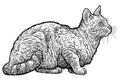 De kattenillustratie van de zittingsgestreepte kat, tekening, gravure, inkt, lijnkunst, vector Stock Foto's