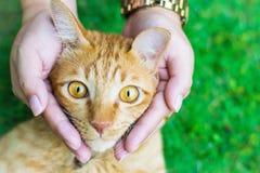 De kattenogen met vrouwelijke handen op gazon die behang of achtergrond voor dieren gebruiken werken Royalty-vrije Stock Afbeeldingen