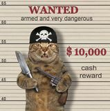 De kattenpiraat is gewild stock fotografie