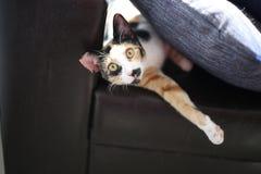 De kattenrest op de bank Stock Foto