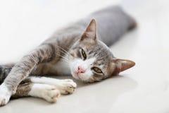 De kattenslaap en onderzoekt camera Stock Foto's