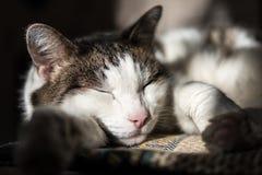 De kattenslaap op de deken royalty-vrije stock foto