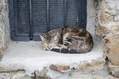De kattenslaap op het venster Royalty-vrije Stock Afbeeldingen