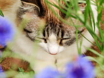 De kattenslaap van de close-upgember in de bloemen Stock Afbeeldingen