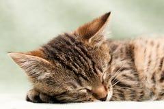De kattenslaap van de gestreepte kat Royalty-vrije Stock Foto's