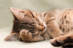 De kattenslaap van de gestreepte kat Stock Foto