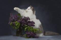 De kattenspelen met een boeket van seringen royalty-vrije stock foto's