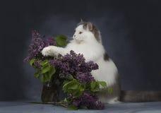 De kattenspelen met een boeket van seringen stock foto's