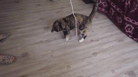De kattenspelen met een kabel stock videobeelden