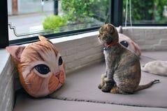 De kattenzitting en ziet buiten eruit Royalty-vrije Stock Afbeeldingen
