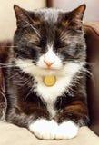 De kattenzitting met gesloten ogen Royalty-vrije Stock Foto
