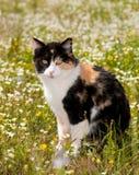 De kattenzitting van het calico in het midden van wildflowers Stock Fotografie