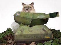 De kattenzitting van Ragdoll in stuk speelgoed tank Stock Afbeeldingen
