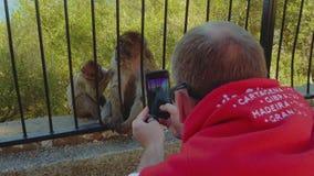 De Kaukasische mens in rode kleren neemt beelden van een paar apen achter een omheining op een smartphone De apen van Gibraltar stock footage