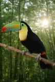 De Kee gefactureerde kleurrijke vogel van de Toekan royalty-vrije stock afbeeldingen