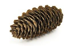 De kegel van de pijnboom een dicht omhooggaand schot. Royalty-vrije Stock Fotografie