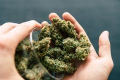 De kegels van cannabisbloemen van het onkruid van de cannabismarihuana liggen op een donkere hoogste mening als achtergrond stock fotografie