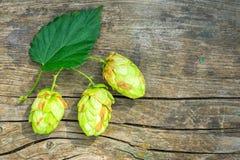 De kegels van de hop royalty-vrije stock afbeelding