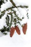 De kegels van de kerstboom die met sneeuw worden behandeld Stock Foto's