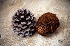 De kegels van de pijnboom en van de Ceder Stock Fotografie