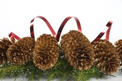 De kegels van Kerstmis royalty-vrije stock foto