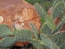 De Kei van de cactus Royalty-vrije Stock Foto