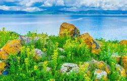 De keien onder wildflowers Royalty-vrije Stock Afbeeldingen