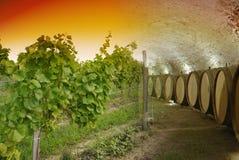 De kelder van de wijn en wijnmakerij Stock Foto