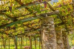 De kenmerkende pylonensteen en de kalk van de wijngaarden van de beroemde Piedmontese wijn Nebbiolo Carema D O C Italië Stock Afbeeldingen